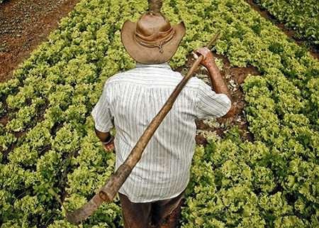 Peon Agrícola Badajoz
