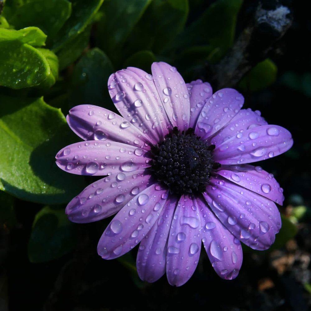 ayudante jardines talavera de la reina